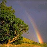 Rainbow Ark: