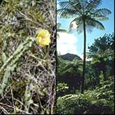 Prickly Pear on the left, a Palm Tree on the right.